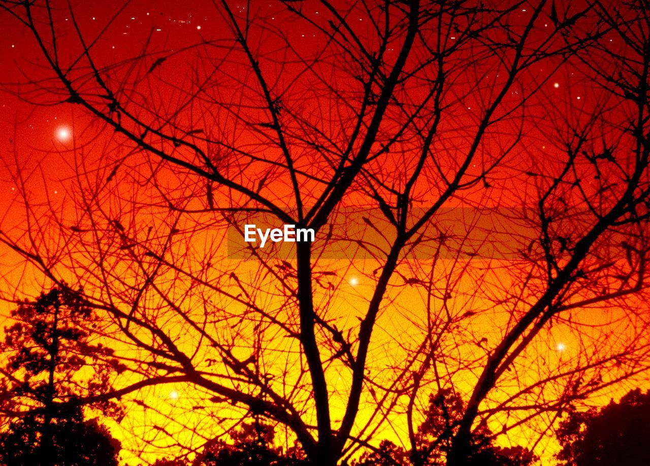 bare tree, sunset, orange color, nature, tree, low angle view, silhouette, outdoors, beauty in nature, sky, no people, branch, night, scenics, red, growth, moon, illuminated