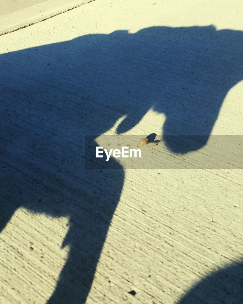 shadow, sunlight, focus on shadow, high angle view, day, real people, sand, sunny, outdoors, leisure activity, nature, animal themes, togetherness, bird, mammal, people