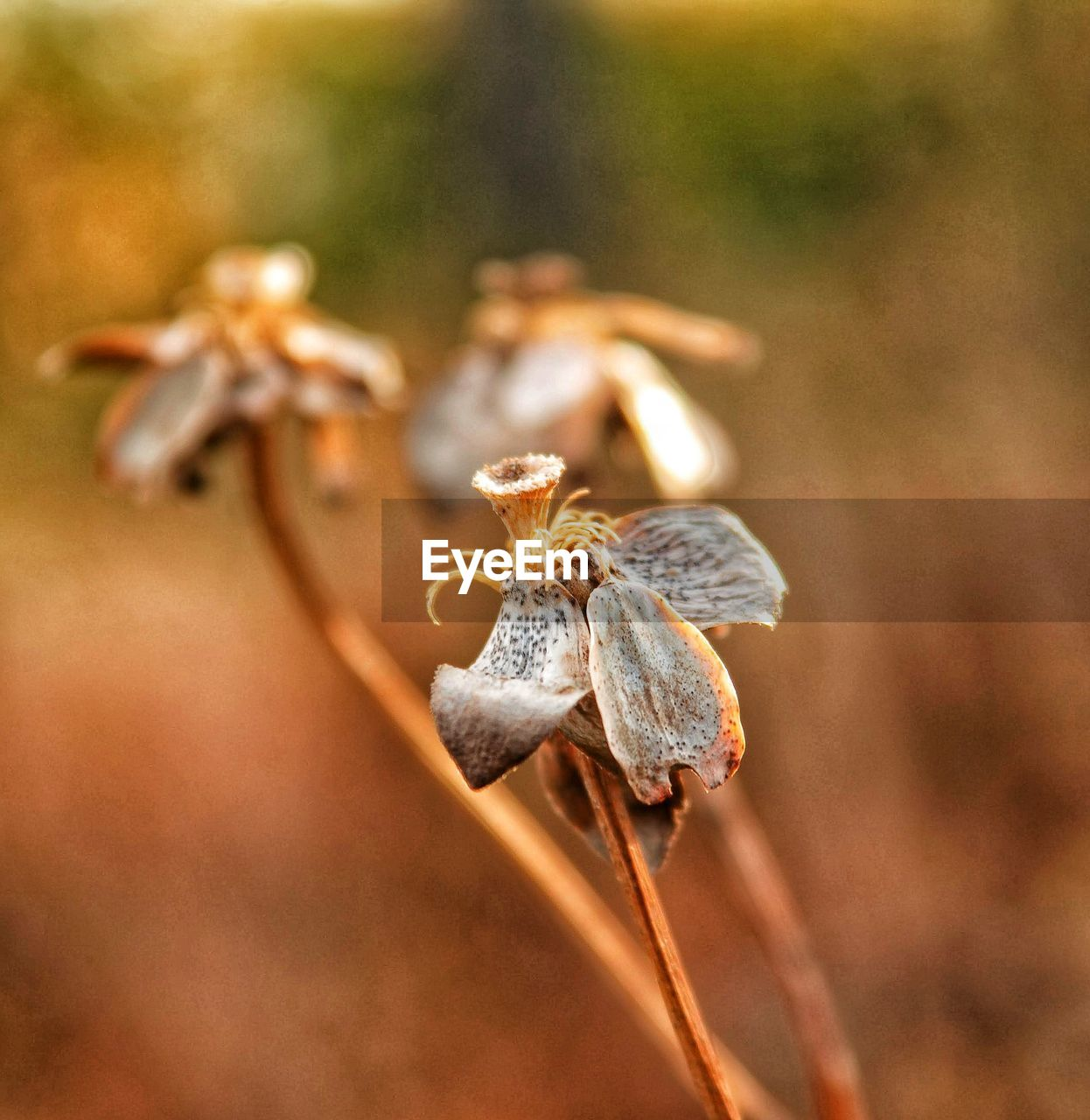 close-up, plant, selective focus, dry, day, focus on foreground, no people, growth, nature, beauty in nature, dried plant, flower, animals in the wild, invertebrate, vulnerability, animal themes, dead plant, fragility, outdoors, animal, wilted plant, dried