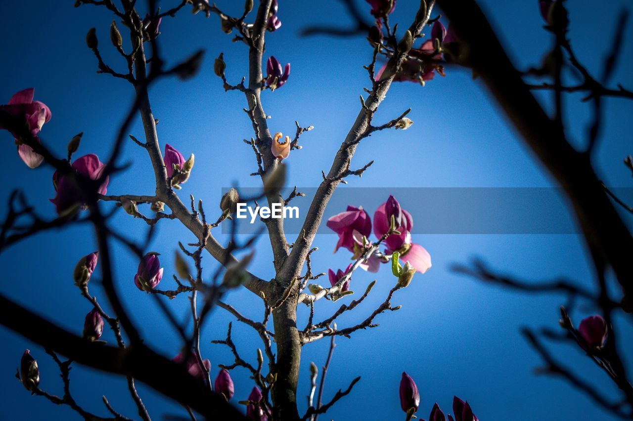 flower, tree, growth, branch, beauty in nature, nature, petal, fragility, no people, day, low angle view, blooming, outdoors, freshness, close-up, flower head, sky