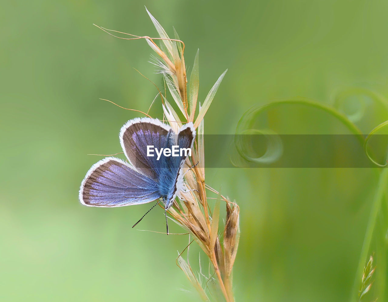 animal wildlife, invertebrate, animal, animal themes, insect, animals in the wild, one animal, plant, close-up, beauty in nature, animal wing, nature, growth, focus on foreground, no people, day, green color, butterfly - insect, vulnerability, butterfly, outdoors