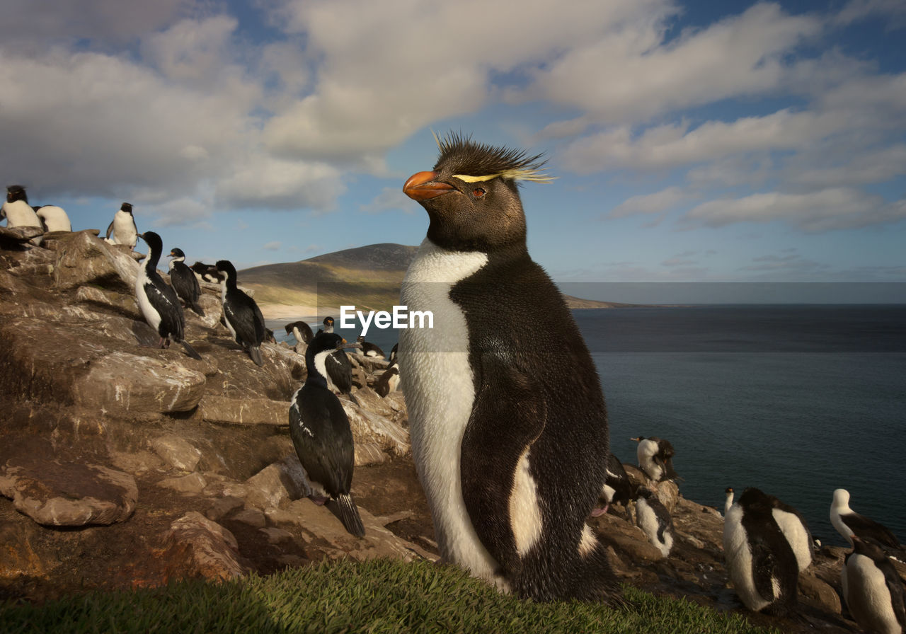 Penguins relaxing on rock formation by sea against cloudy sky