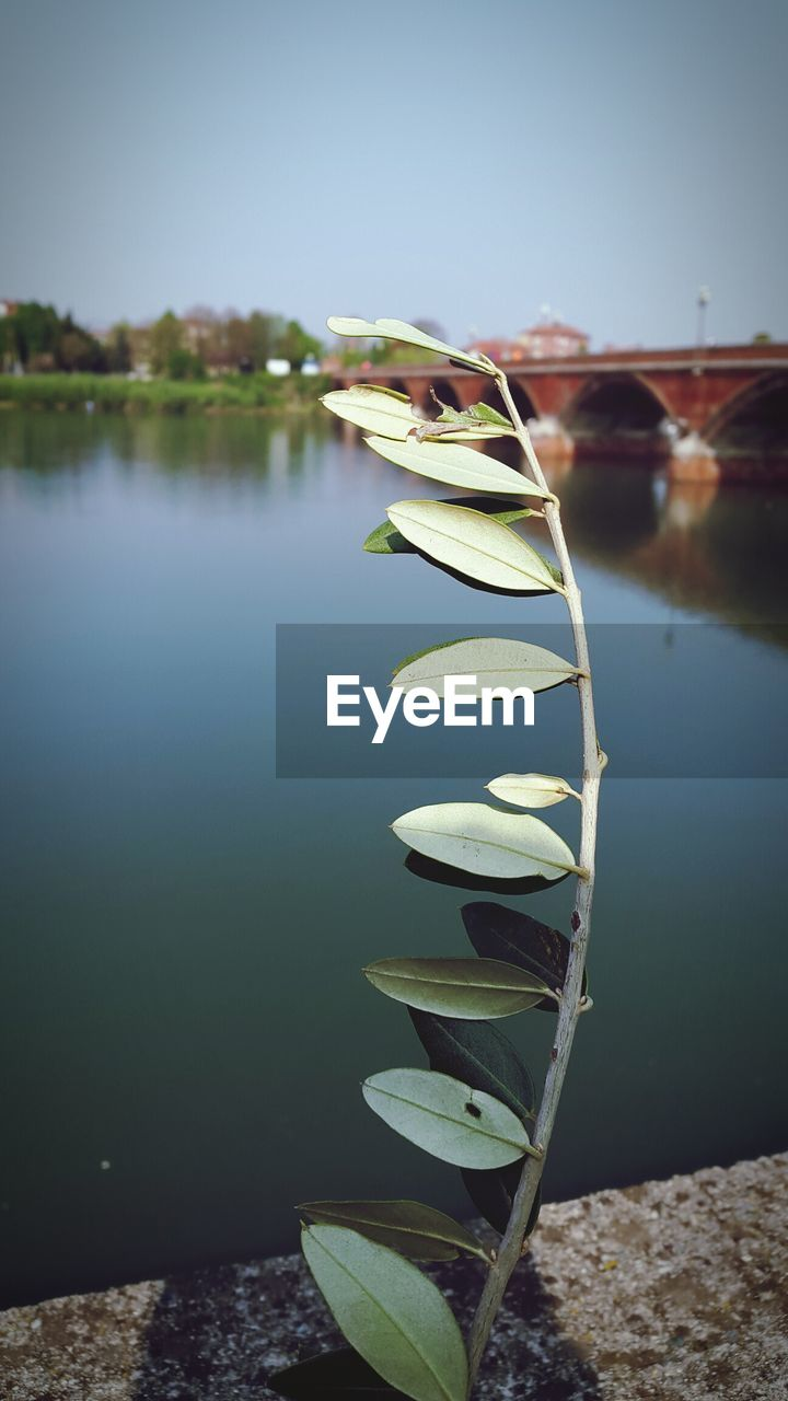 water, nature, lake, plant, beauty in nature, reflection, no people, day, tranquility, leaf, nautical vessel, focus on foreground, close-up, plant part, growth, flower, outdoors, freshness, floating on water