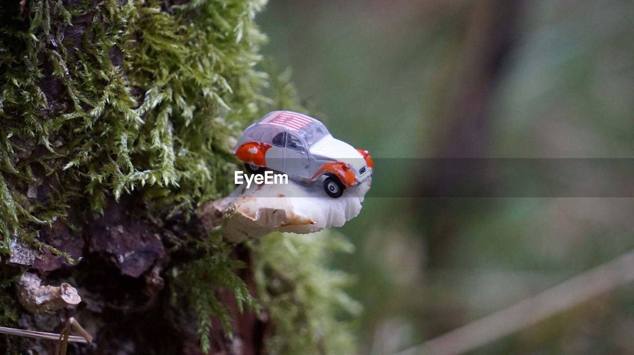 animals in the wild, one animal, insect, animal themes, ladybug, focus on foreground, close-up, no people, animal wildlife, tiny, nature, day, outdoors, plant, beauty in nature