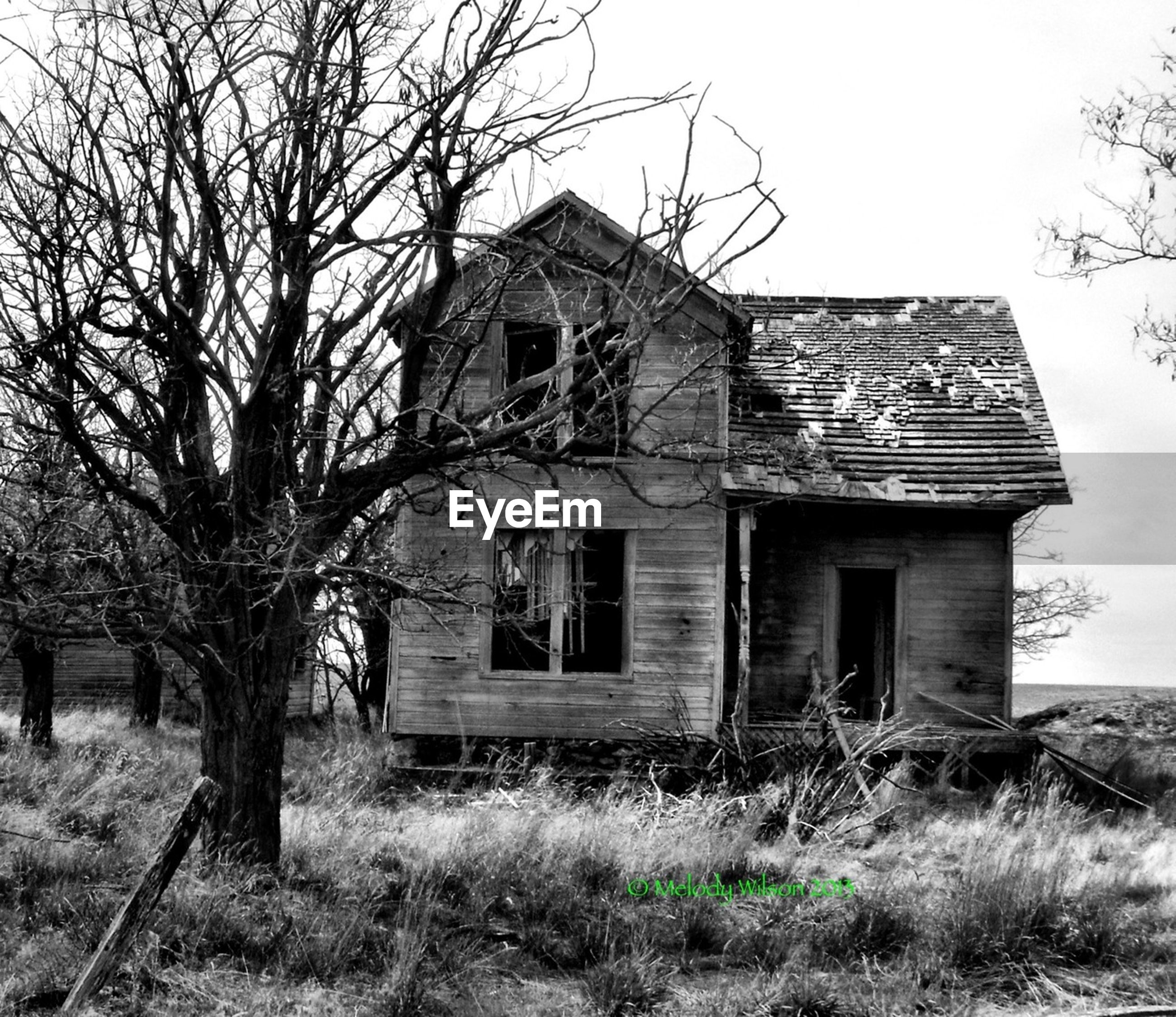 architecture, built structure, building exterior, grass, abandoned, old, house, tree, bare tree, field, damaged, sky, obsolete, run-down, barn, deterioration, history, old ruin, rural scene, clear sky