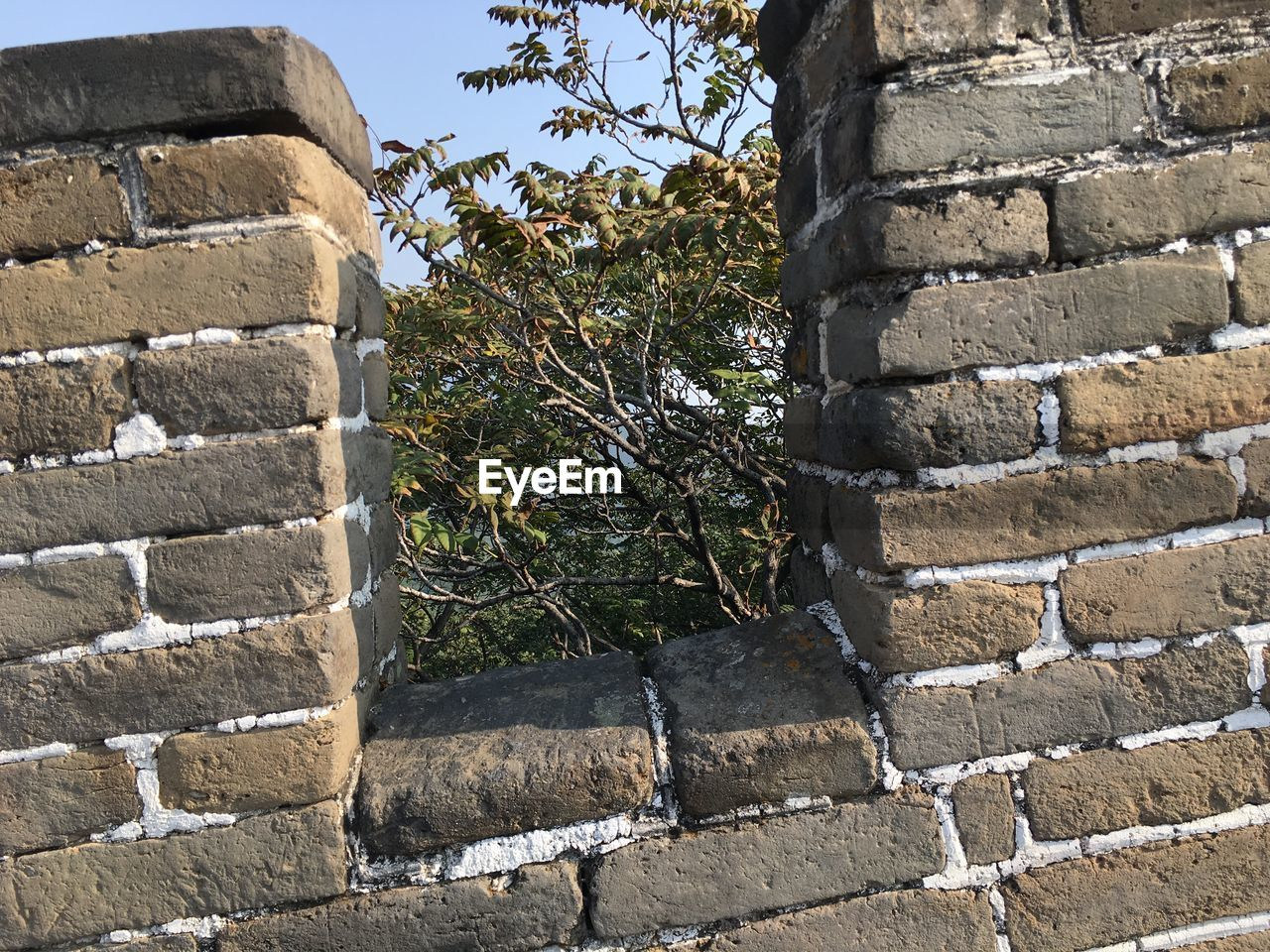 built structure, stone wall, brick wall, architecture, wall - building feature, building exterior, stone material, day, low angle view, tree, outdoors, no people, growth, steps, castle, plant, old ruin, ivy, retaining wall, nature, branch, close-up, sky