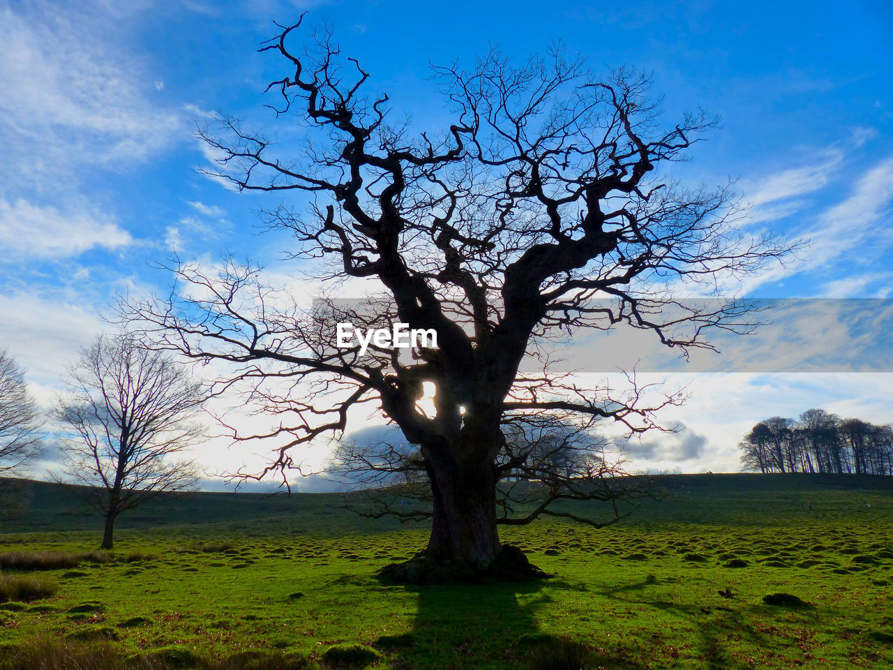 VIEW OF BARE TREE ON FIELD