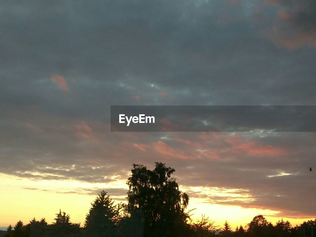 sunset, sky, tree, cloud - sky, nature, silhouette, beauty in nature, scenics, tranquility, tranquil scene, no people, dusk, low angle view, outdoors, growth, day