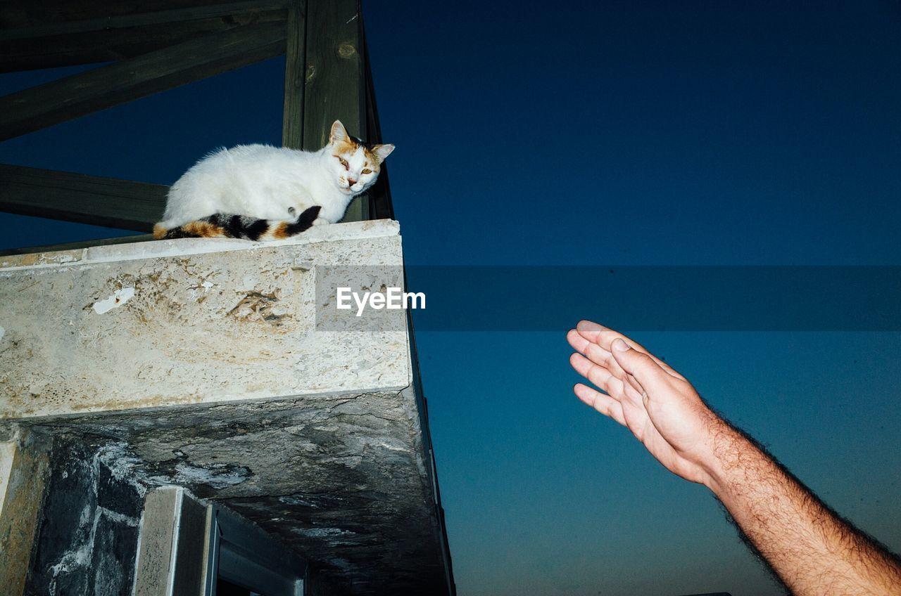 Cat Looking At Camera