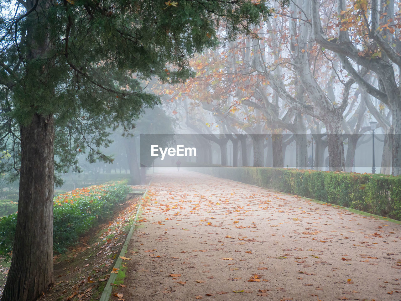 ROAD BY TREES DURING FOGGY WEATHER
