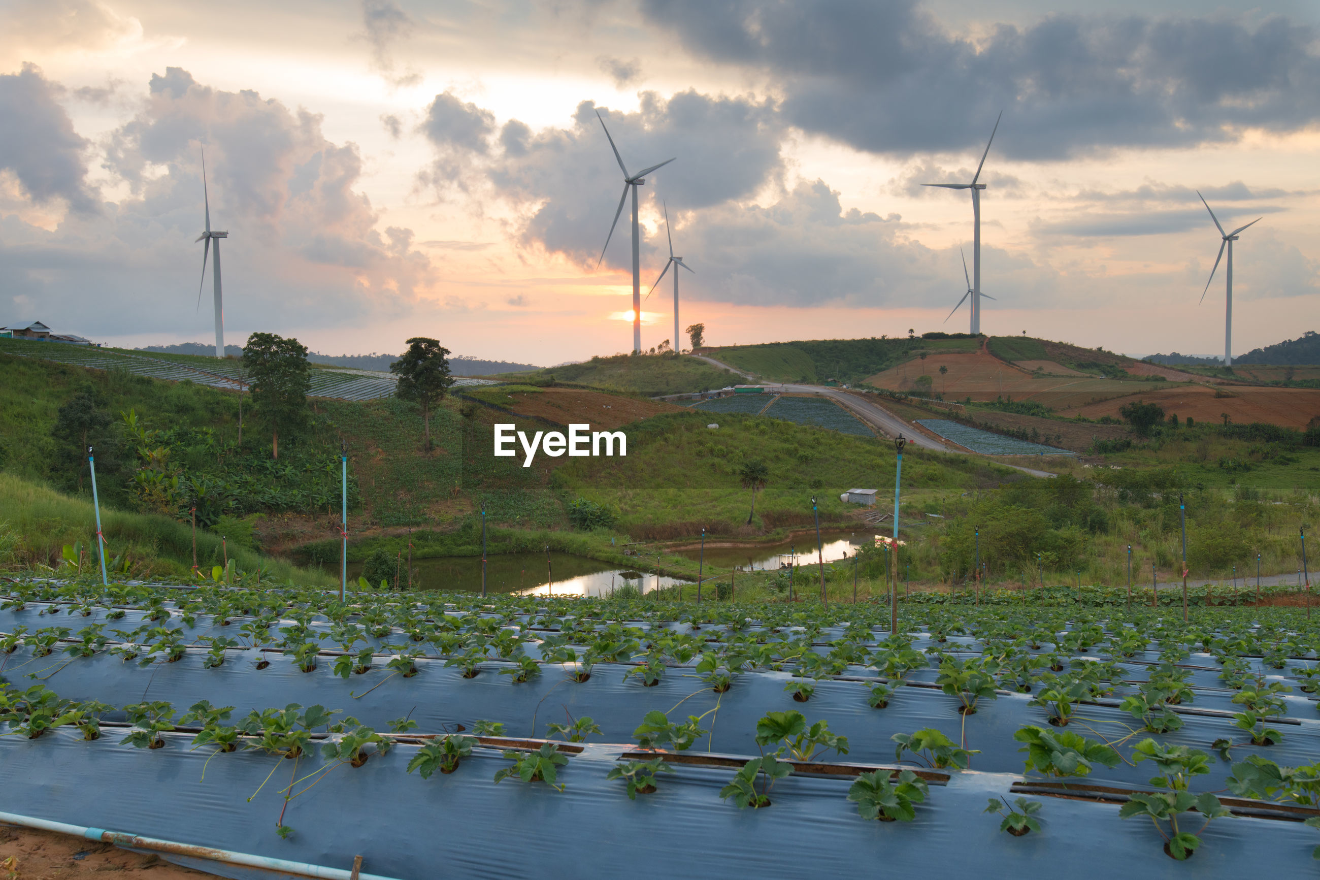 PANORAMIC VIEW OF WIND TURBINES IN FARM
