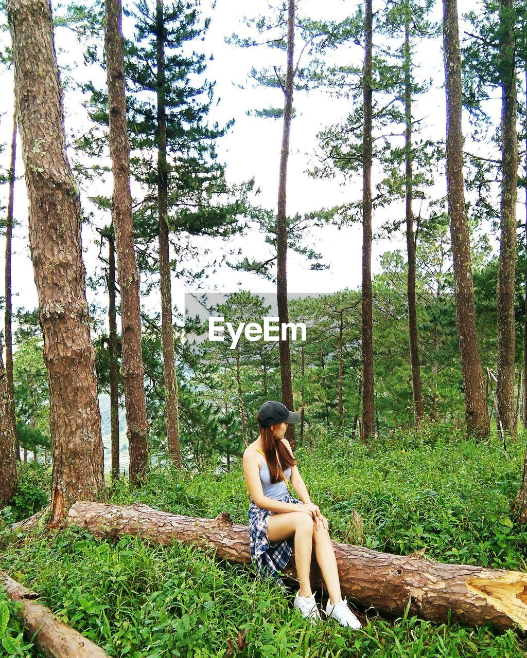 tree, forest, one person, sitting, young adult, full length, day, young women, real people, nature, beauty in nature, outdoors, sky, people