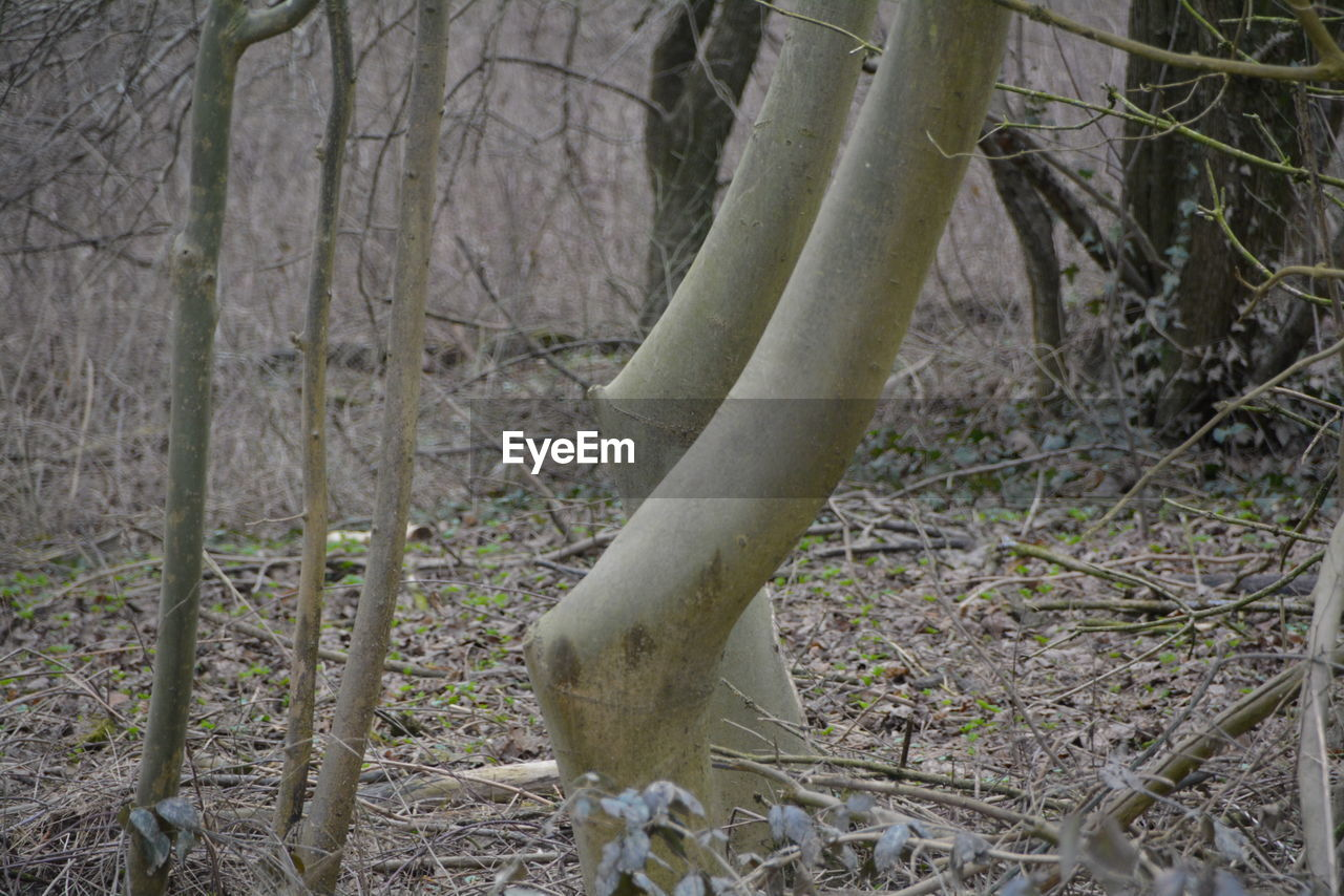 tree trunk, nature, forest, no people, tranquility, outdoors, day, tree, branch, growth, beauty in nature