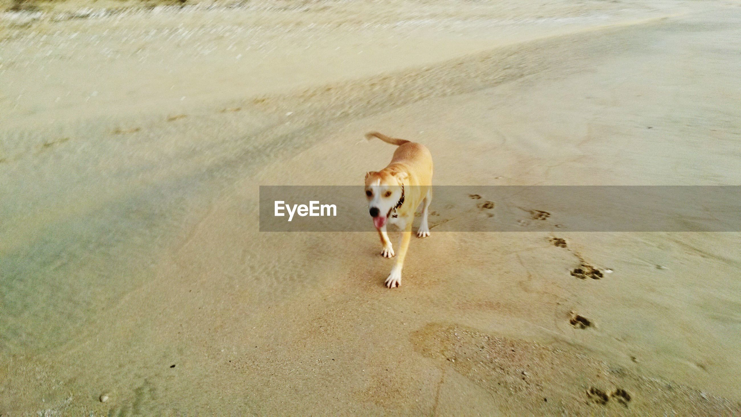 animal themes, one animal, domestic animals, mammal, high angle view, sand, pets, full length, animals in the wild, wildlife, beach, young animal, dog, zoology, bird, nature, no people, day, outdoors, white color