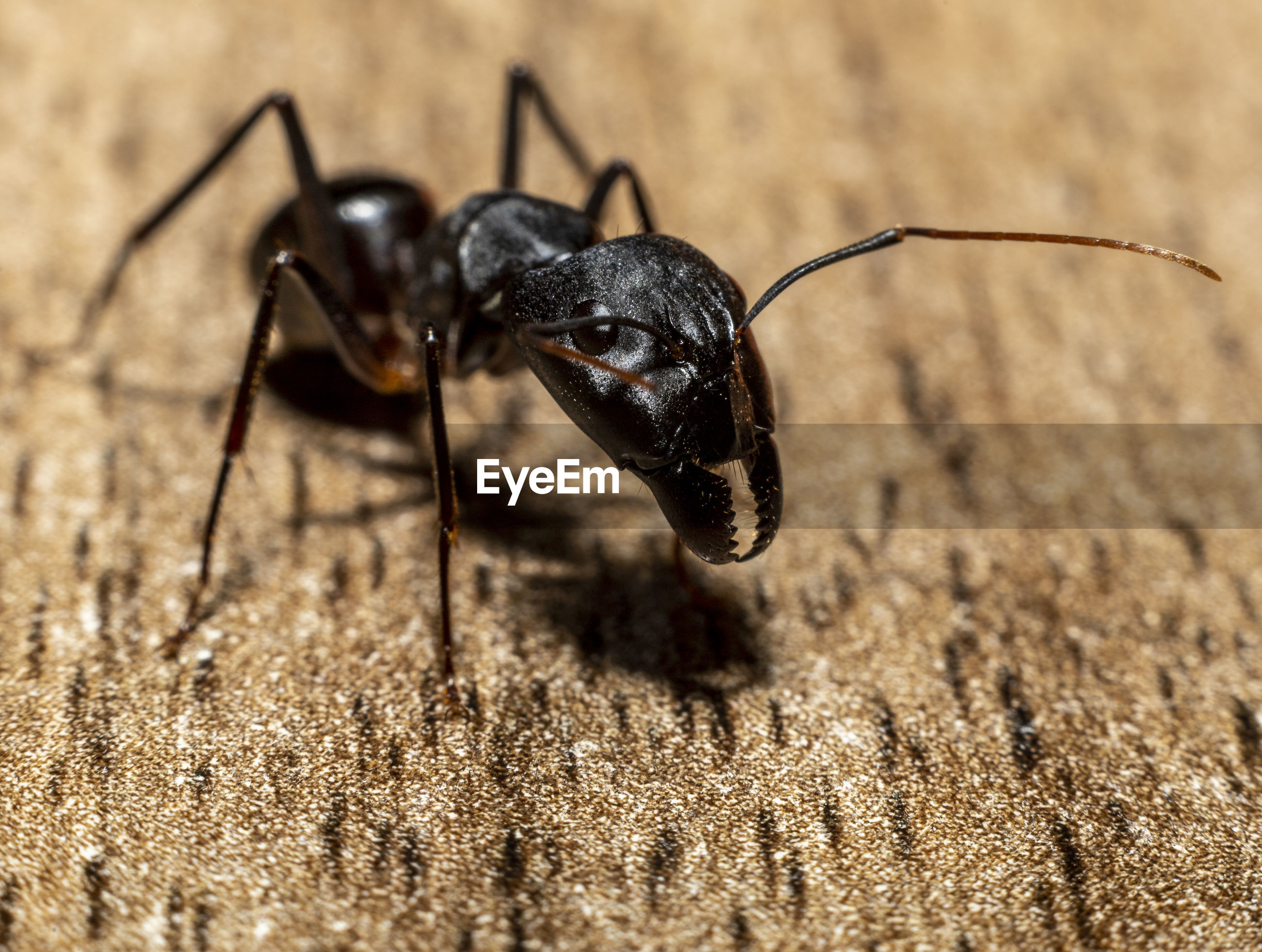 CLOSE-UP OF ANT ON THE GROUND
