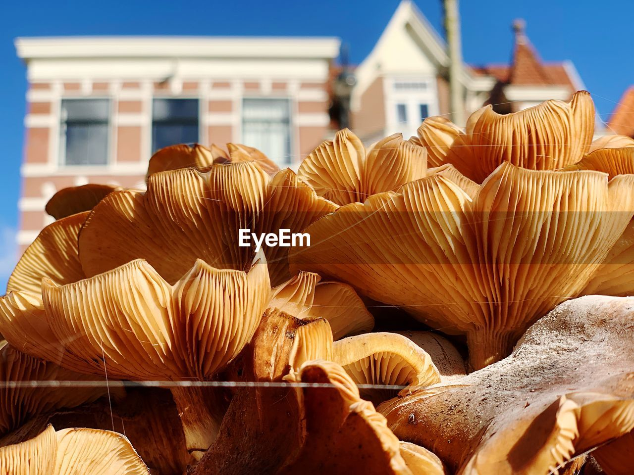 no people, day, architecture, close-up, nature, fungus, food, building exterior, built structure, sunlight, vegetable, focus on foreground, mushroom, growth, large group of objects, freshness, food and drink, wellbeing, abundance, retail