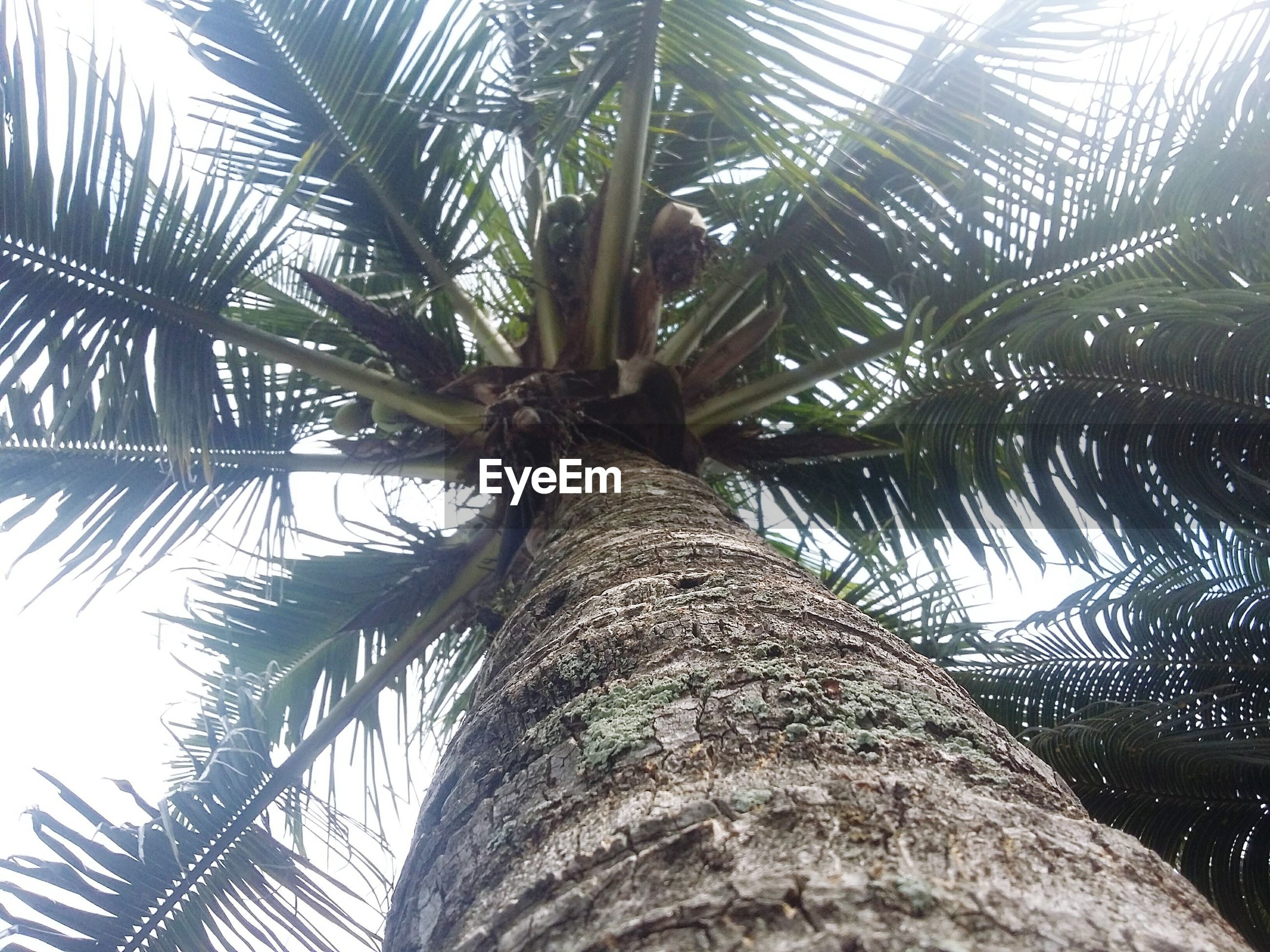 palm tree, tree, growth, palm leaf, nature, low angle view, leaf, tree trunk, tranquility, branch, beauty in nature, sky, day, sunlight, outdoors, green color, scenics, no people, tall - high, tranquil scene