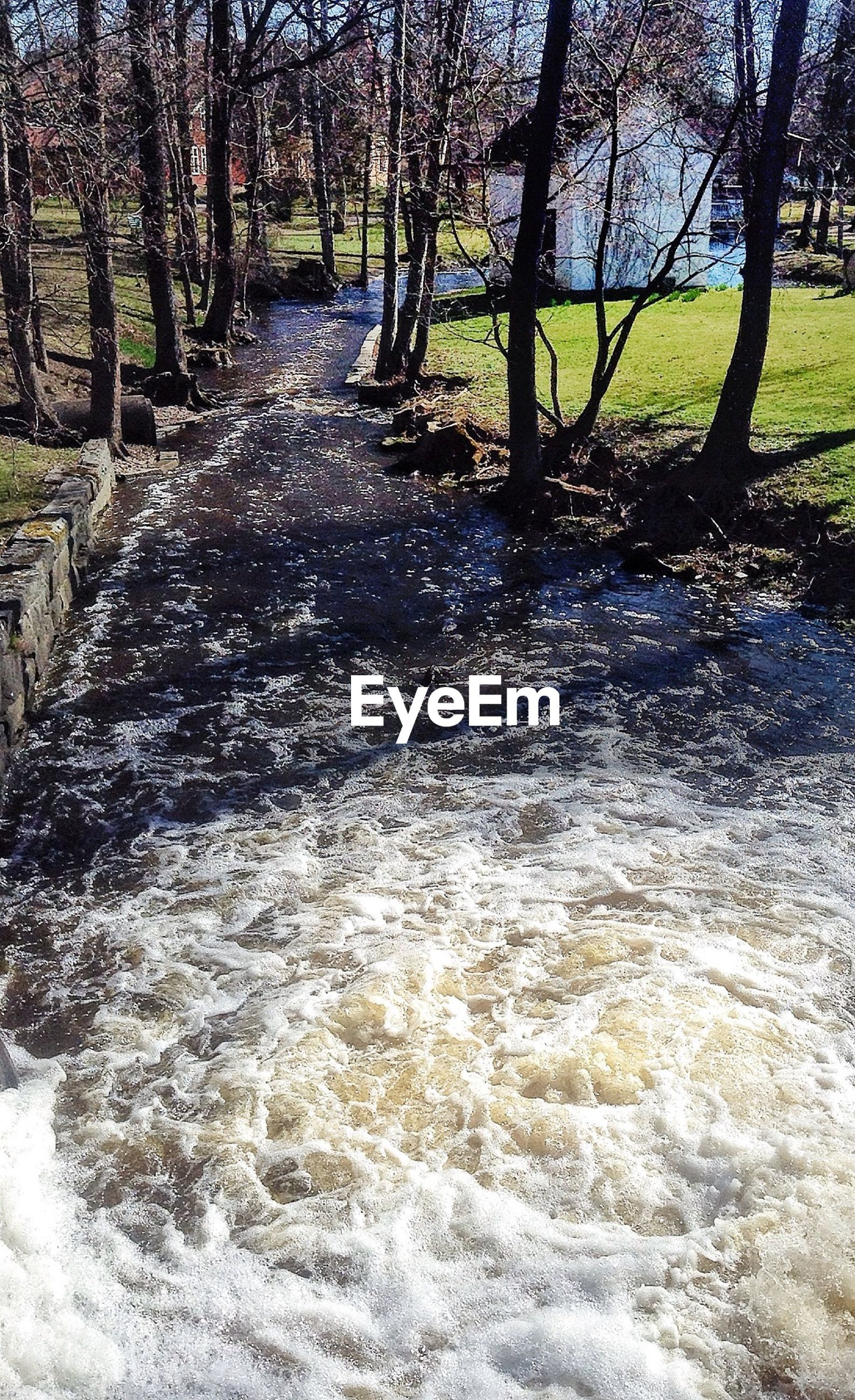 Stream flowing through trees