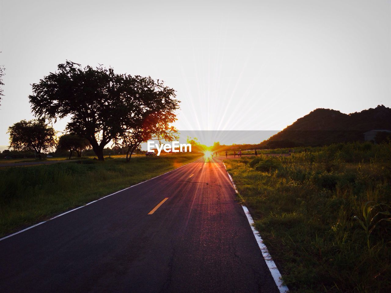 road, sunset, sun, sunlight, nature, the way forward, tree, diminishing perspective, transportation, landscape, clear sky, silhouette, scenics, outdoors, grass, no people, sky, beauty in nature, day