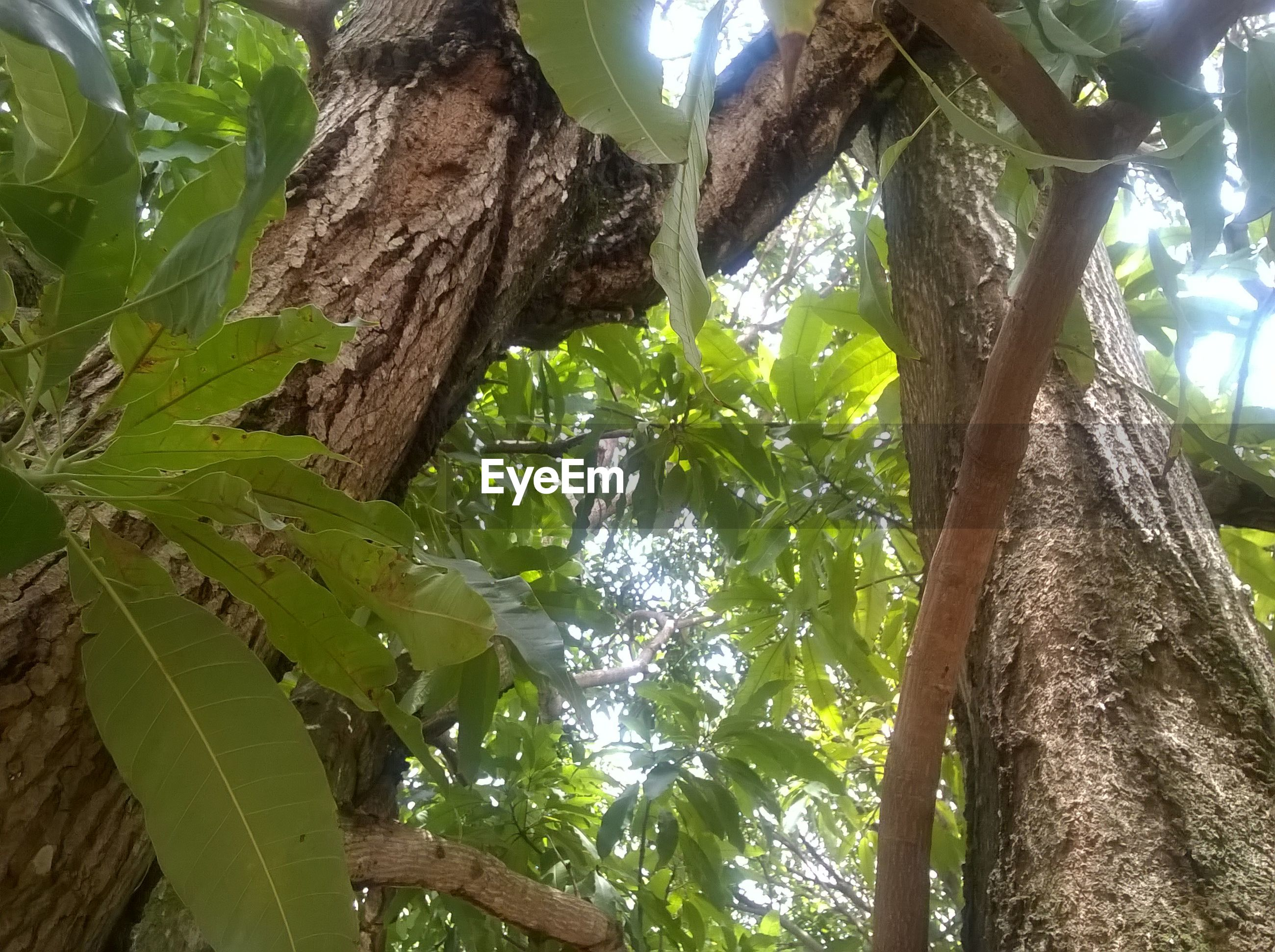 tree, low angle view, nature, growth, green color, leaf, no people, beauty in nature, sky, outdoors, day, branch, close-up