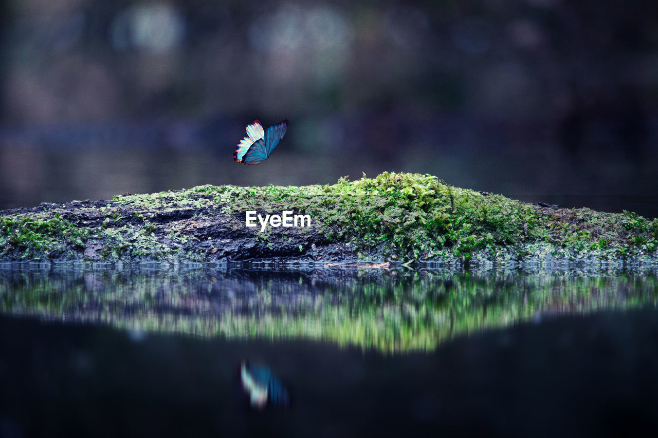 Butterfly Flying By Moss Covered Rock On Lake