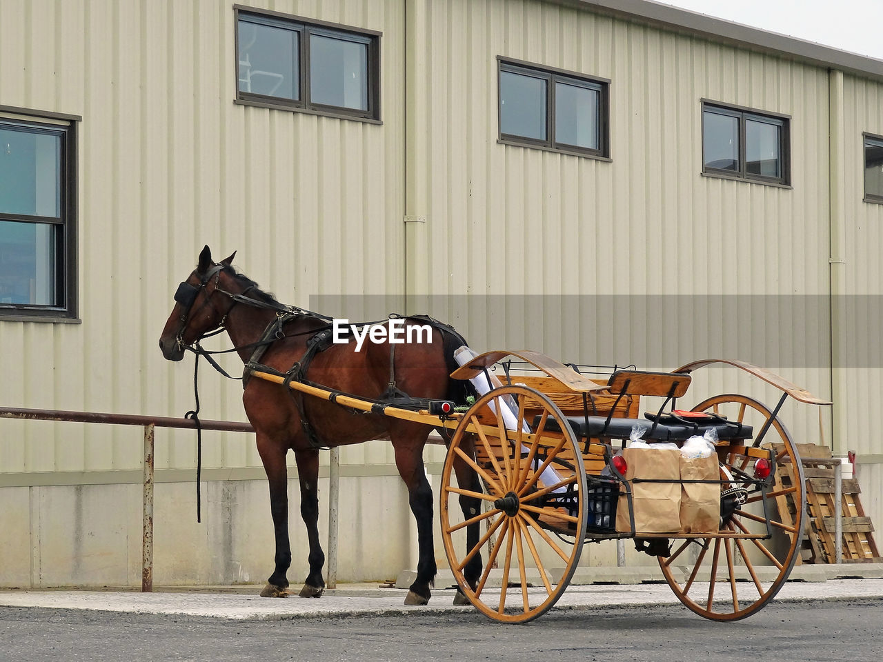 Horse carriage parked by building