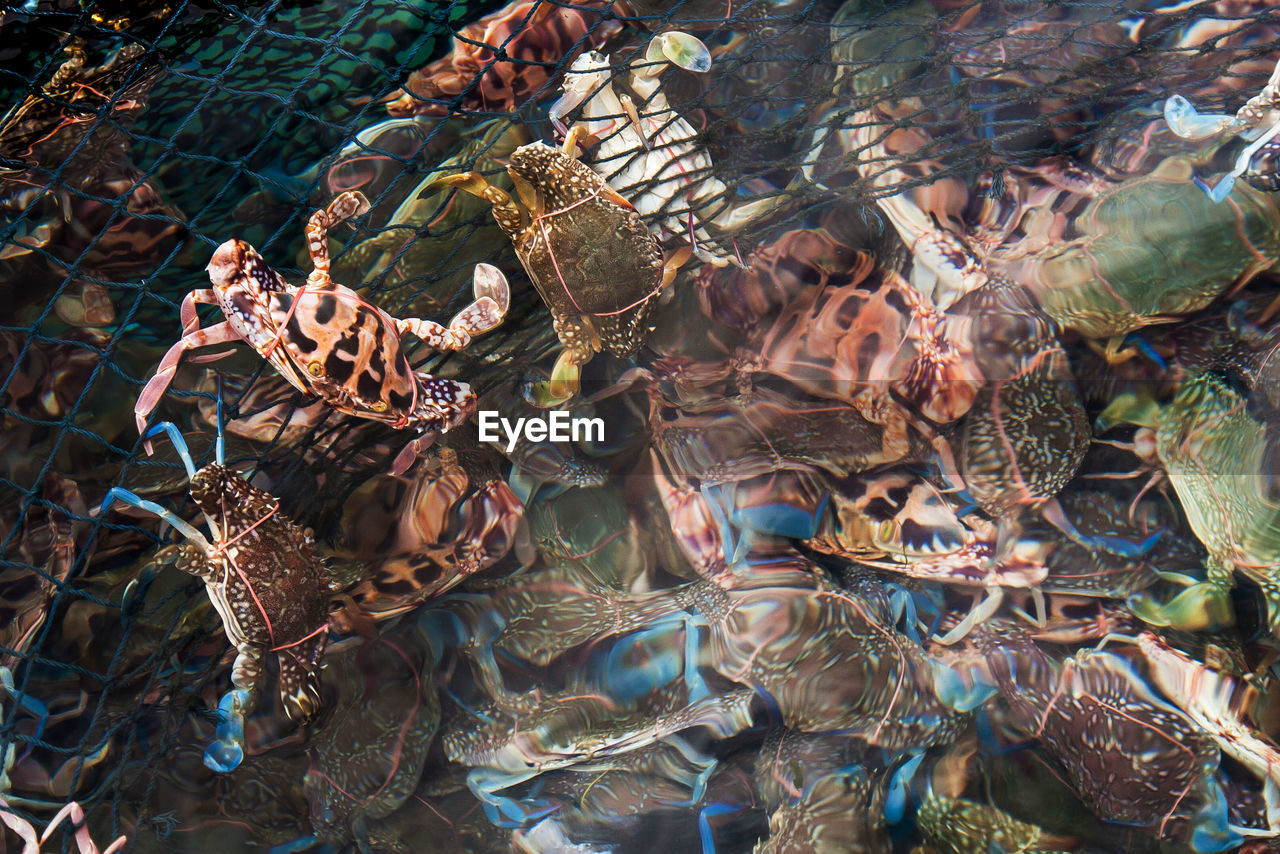 High angle view of crabs