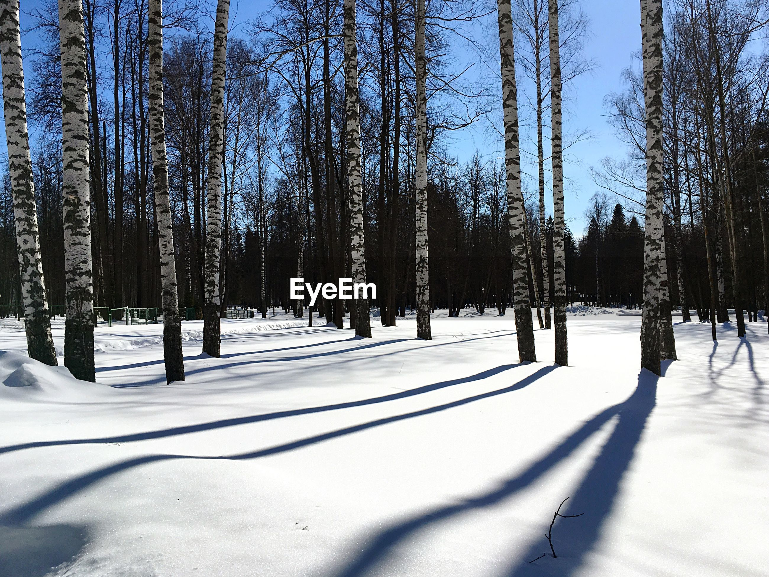 TREES IN SNOW COVERED LAND