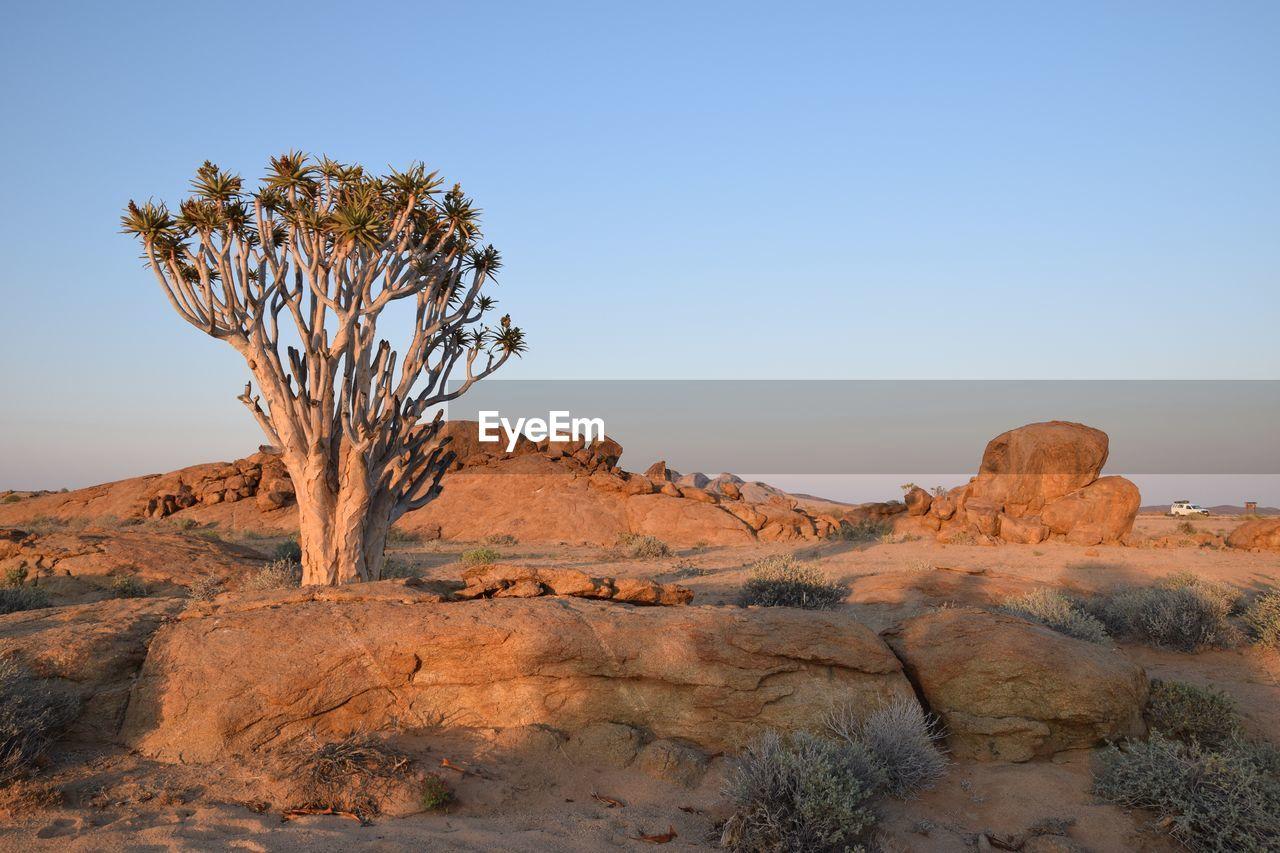TREE ON DESERT AGAINST SKY