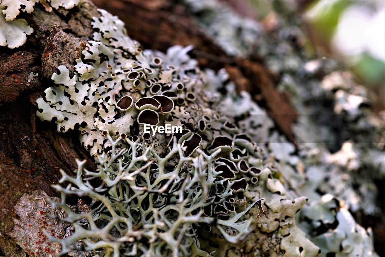 fungus, plant, close-up, growth, selective focus, no people, nature, beauty in nature, mushroom, day, vegetable, focus on foreground, tree, food, toadstool, moss, lichen, land, tree trunk, outdoors