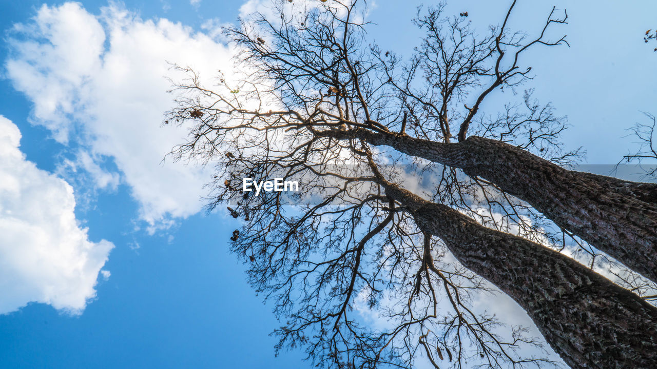 sky, tree, low angle view, plant, branch, bare tree, cloud - sky, nature, tranquility, no people, day, beauty in nature, blue, outdoors, tranquil scene, scenics - nature, growth, trunk, tree trunk, winter, tree canopy