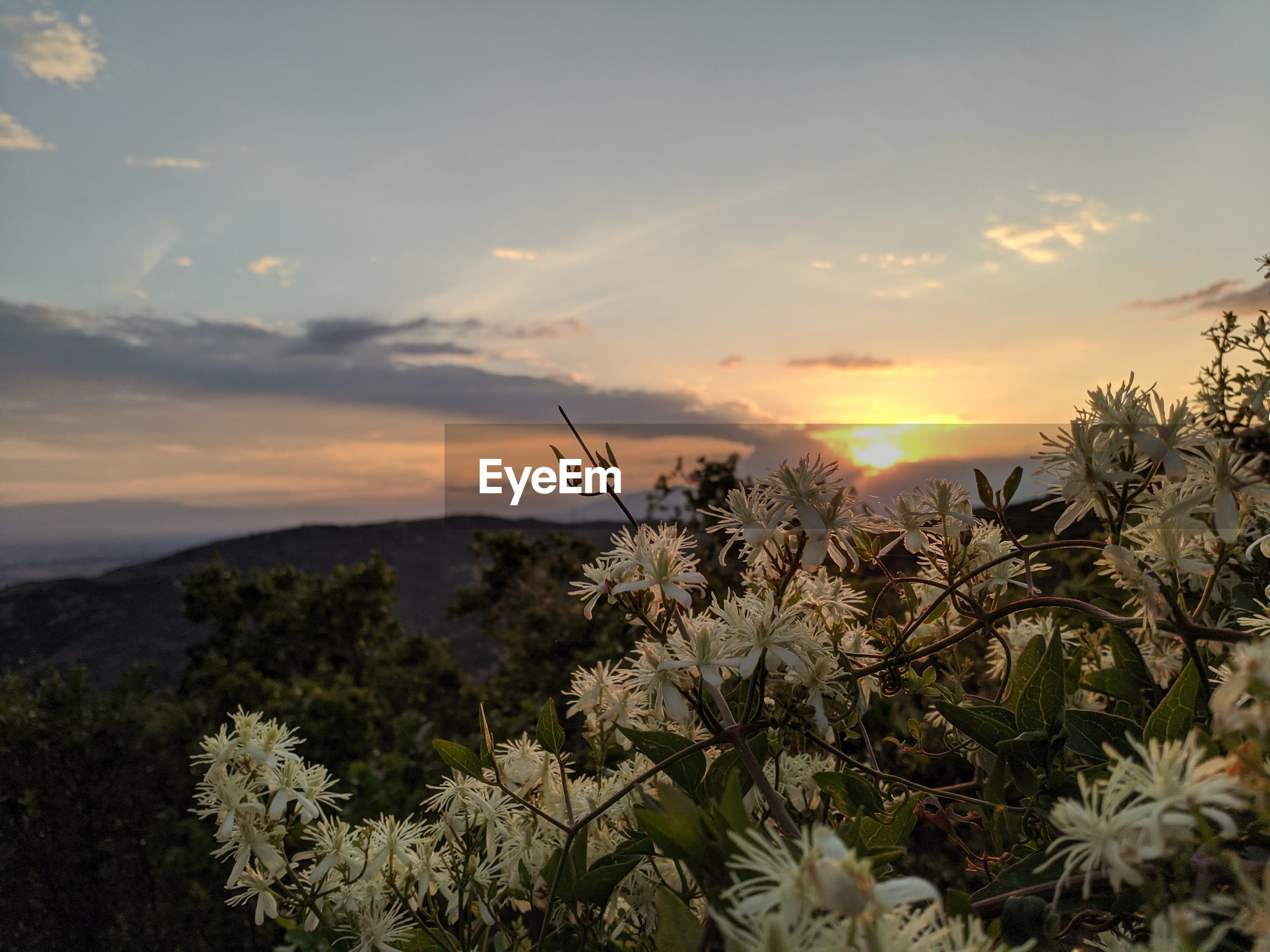 SCENIC VIEW OF FLOWERING PLANTS AGAINST SUNSET SKY