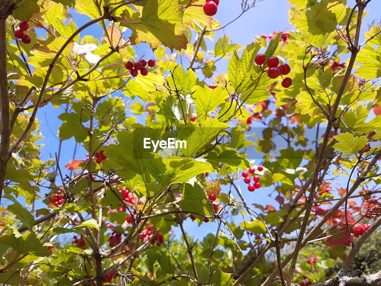 growth, plant, leaf, plant part, low angle view, tree, beauty in nature, day, freshness, branch, nature, green color, no people, sky, sunlight, yellow, close-up, flowering plant, outdoors, flower