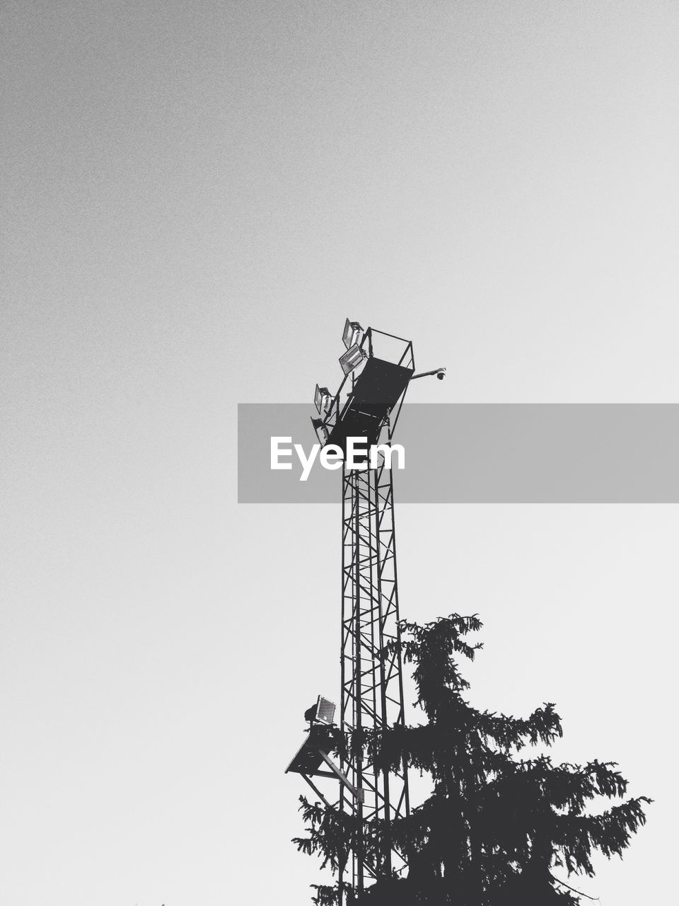 low angle view, copy space, clear sky, tree, day, outdoors, no people, sky