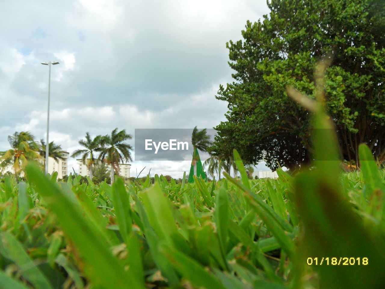 growth, nature, no people, field, day, sky, green color, beauty in nature, tranquility, plant, cloud - sky, outdoors, grass, scenics, tree, close-up