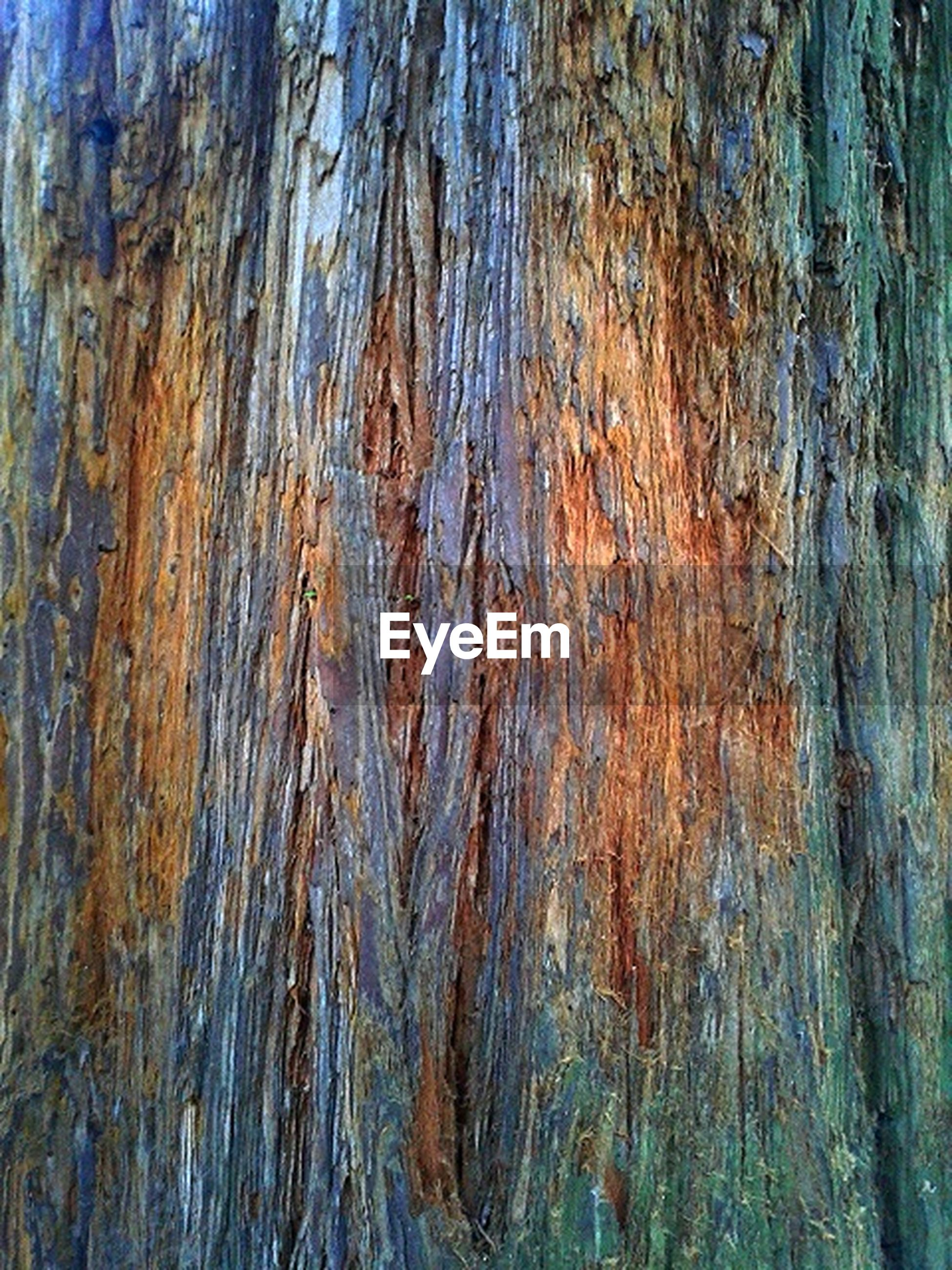 full frame, textured, backgrounds, wood - material, tree trunk, close-up, rough, pattern, weathered, tree, natural pattern, bark, wood, blue, wooden, outdoors, detail, day, nature, no people