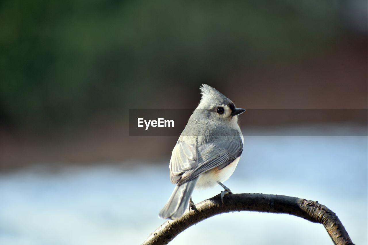 Close-Up Of Bird Perching Branch