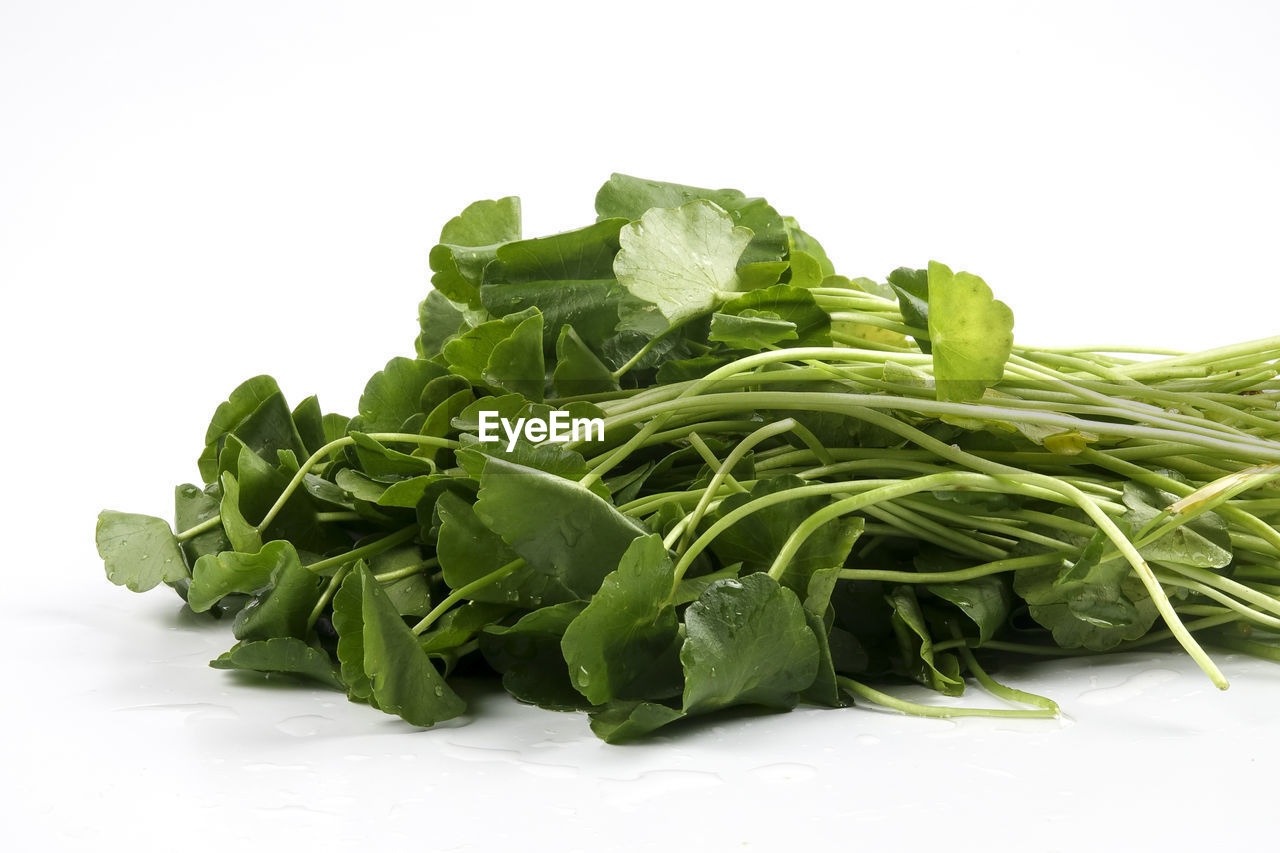 green color, white background, food, food and drink, freshness, healthy eating, vegetable, studio shot, leaf, no people, raw food, close-up, indoors, day