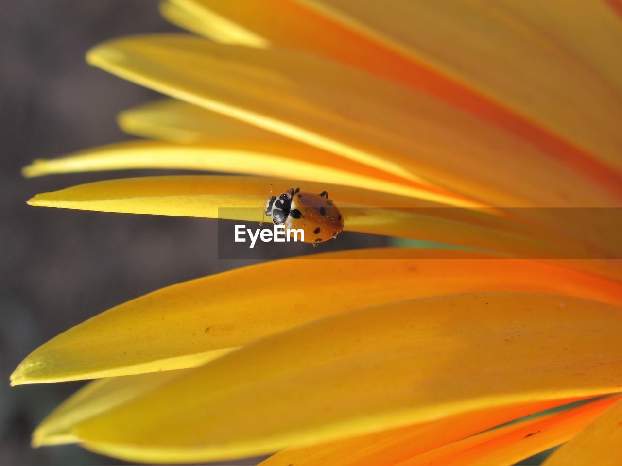 flower, flowering plant, yellow, fragility, beauty in nature, vulnerability, petal, plant, close-up, flower head, freshness, insect, invertebrate, inflorescence, growth, animal wildlife, animals in the wild, animal themes, one animal, no people, pollen, pollination, outdoors
