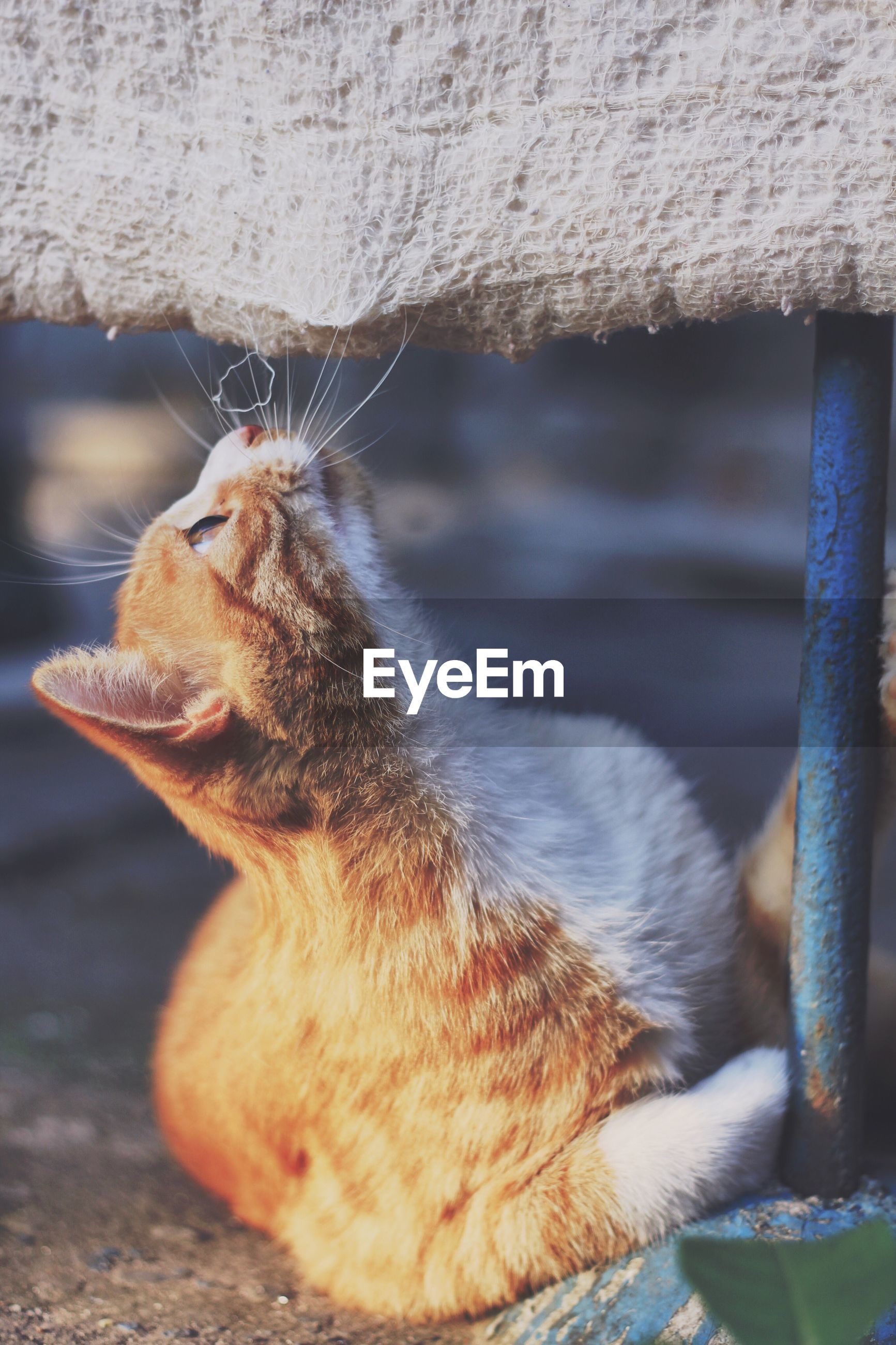 one animal, animal themes, domestic cat, mammal, domestic animals, pets, cat, whisker, close-up, focus on foreground, zoology, curiosity, day, no people, animal, laziness