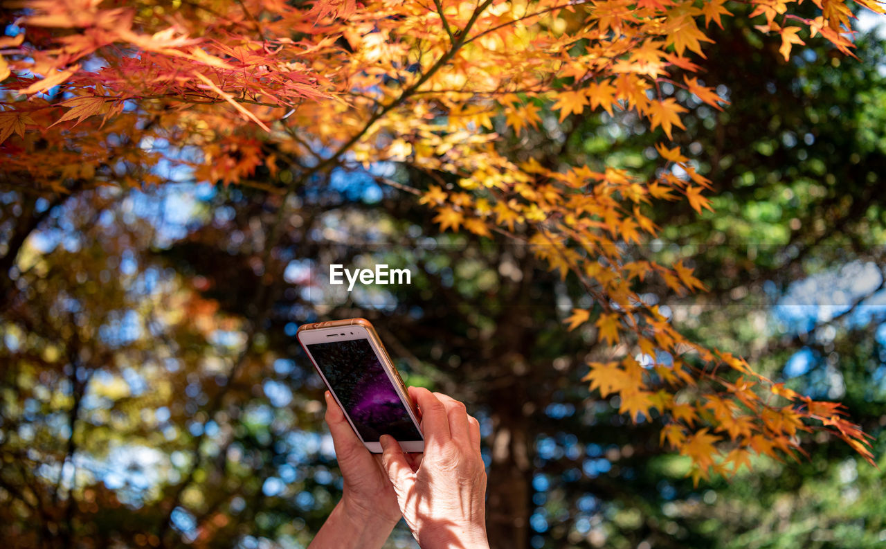 wireless technology, hand, human hand, autumn, tree, technology, one person, portable information device, change, holding, mobile phone, human body part, smart phone, focus on foreground, plant, communication, nature, real people, leaf, plant part, outdoors, finger