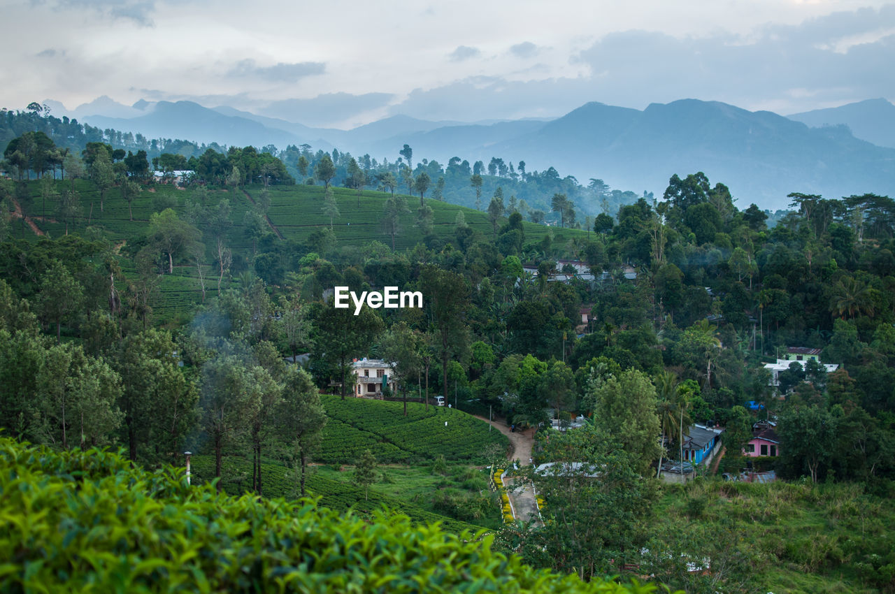 Scenic view of village amidst trees against sky