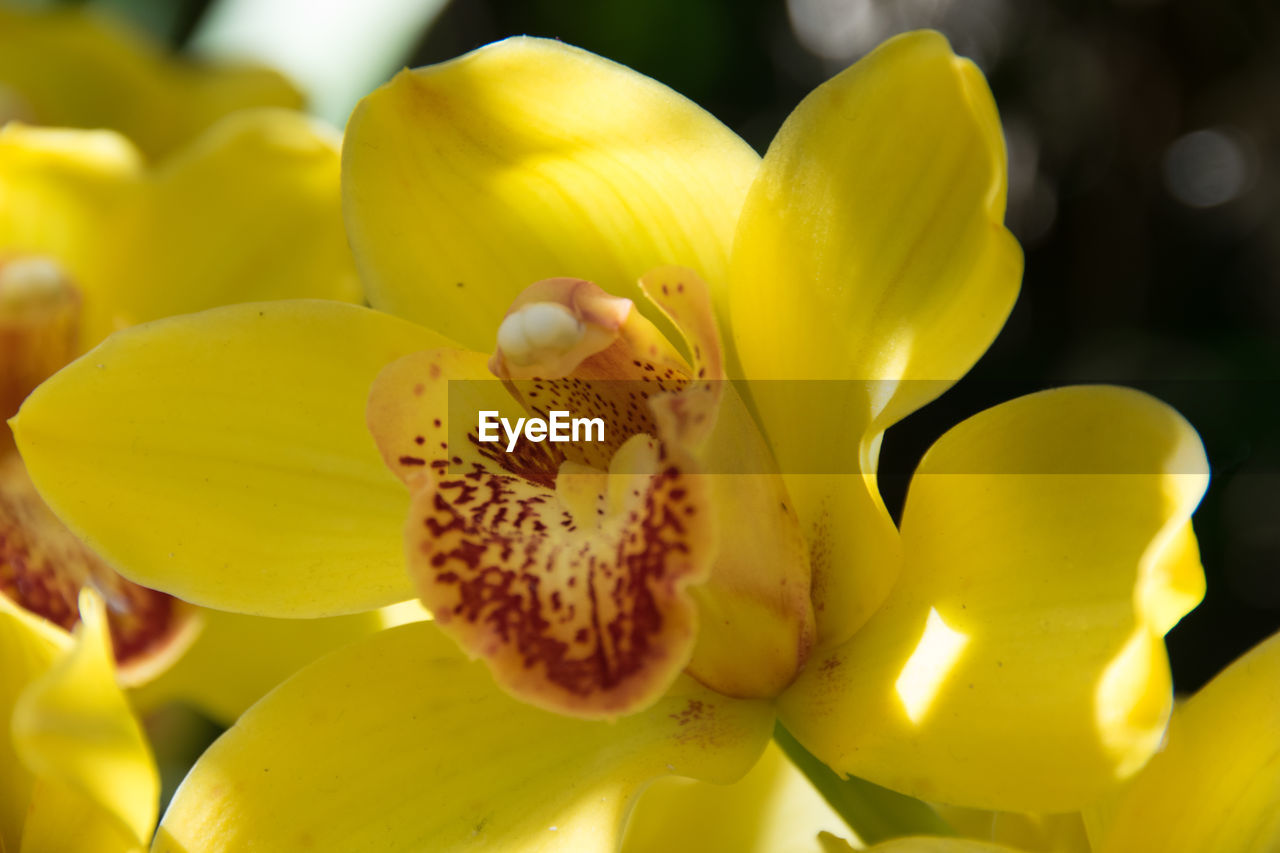 flower, petal, growth, yellow, nature, beauty in nature, fragility, flower head, freshness, close-up, no people, plant, day, stamen, outdoors, one animal, animals in the wild, animal themes, blooming
