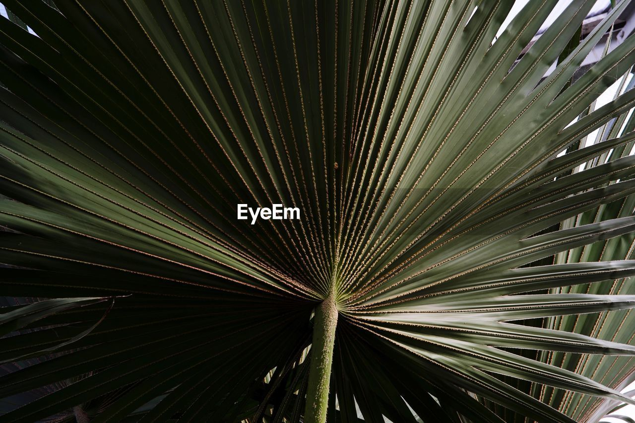 leaf, growth, full frame, pattern, plant part, plant, no people, backgrounds, palm tree, close-up, beauty in nature, palm leaf, tree, natural pattern, green color, tropical climate, frond, nature, day, outdoors, directly below