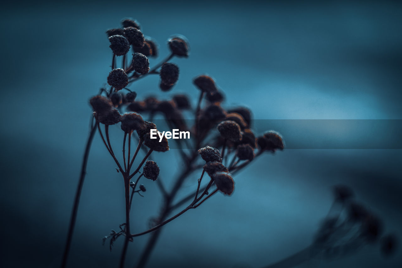 plant, beauty in nature, no people, nature, close-up, flower, growth, focus on foreground, selective focus, dry, vulnerability, flowering plant, tranquility, fragility, plant stem, sky, dead plant, freshness, outdoors, wilted plant, dried