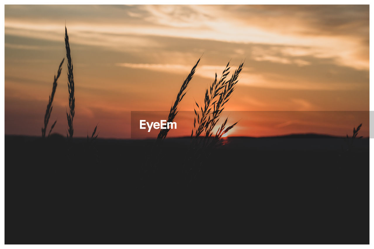 sunset, sky, beauty in nature, cloud - sky, tranquility, orange color, silhouette, scenics - nature, tranquil scene, nature, growth, no people, plant, transfer print, landscape, environment, auto post production filter, field, land, agriculture, outdoors, stalk