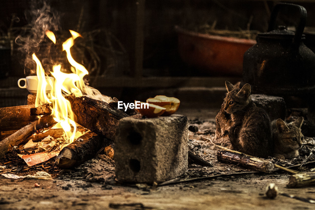 fire, burning, flame, fire - natural phenomenon, wood - material, wood, no people, log, nature, heat - temperature, firewood, focus on foreground, selective focus, bonfire, fireplace, close-up, outdoors, food, fire pit, day
