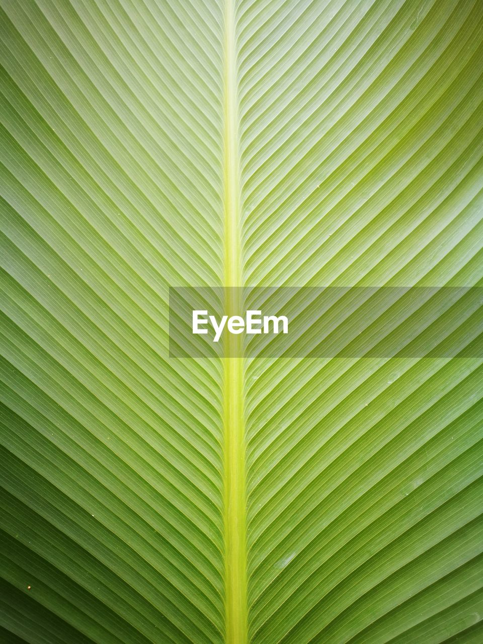 leaf, plant part, green color, backgrounds, palm leaf, pattern, plant, no people, full frame, close-up, palm tree, nature, natural pattern, tropical climate, textured, tree, growth, beauty in nature, leaf vein, frond, outdoors, leaves, abstract, abstract backgrounds, textured effect, natural condition