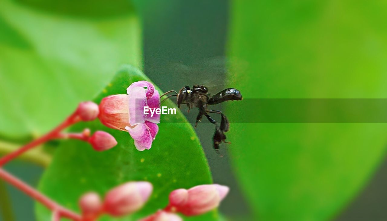 insect, animals in the wild, animal themes, green color, one animal, leaf, nature, animal wildlife, no people, day, plant, outdoors, close-up, growth, freshness