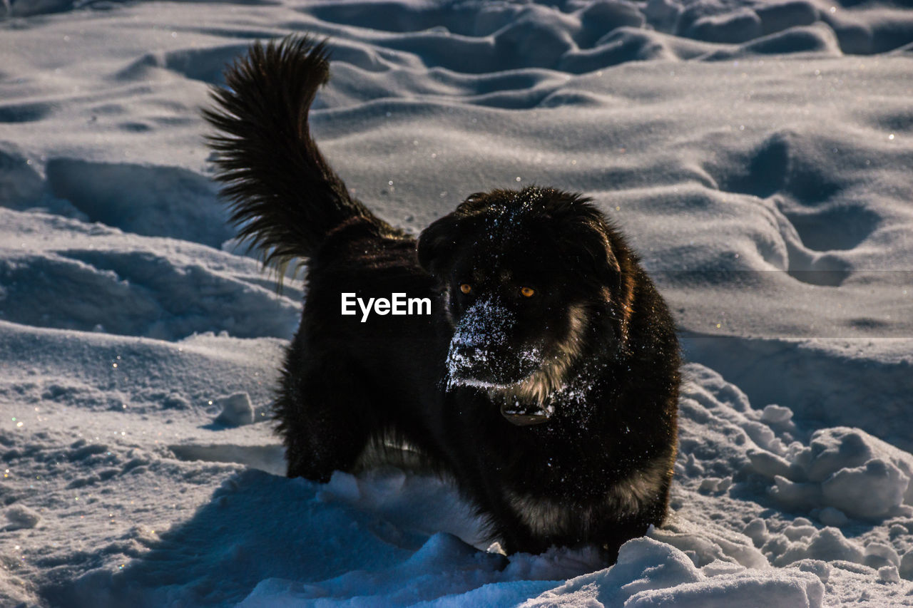 Dog On Snow During Winter
